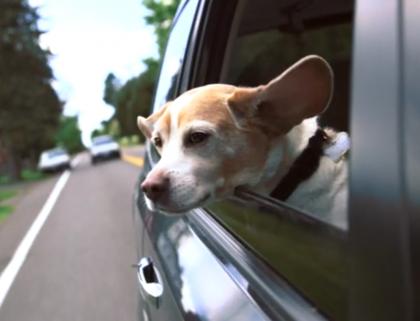 Community Fundraiser: Pet Food Drive